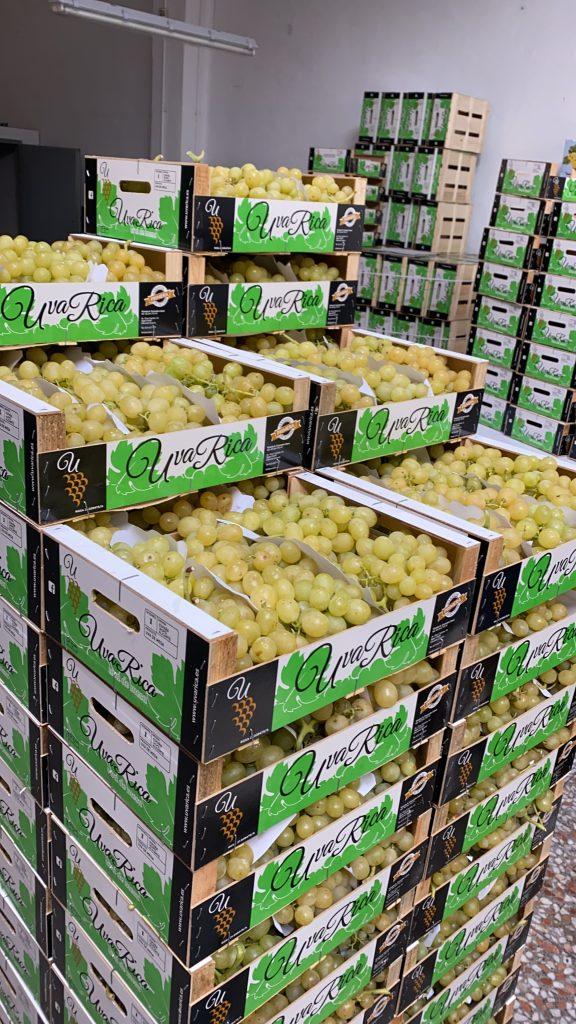 La uva de mesa embolsada una vez ha salido del proceso de limpiado de la uva en uvarica