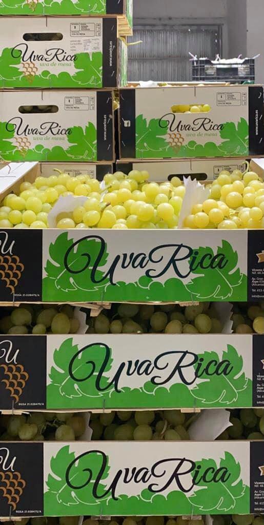 Primeras uvas de UvaRica de la Campaña 2021